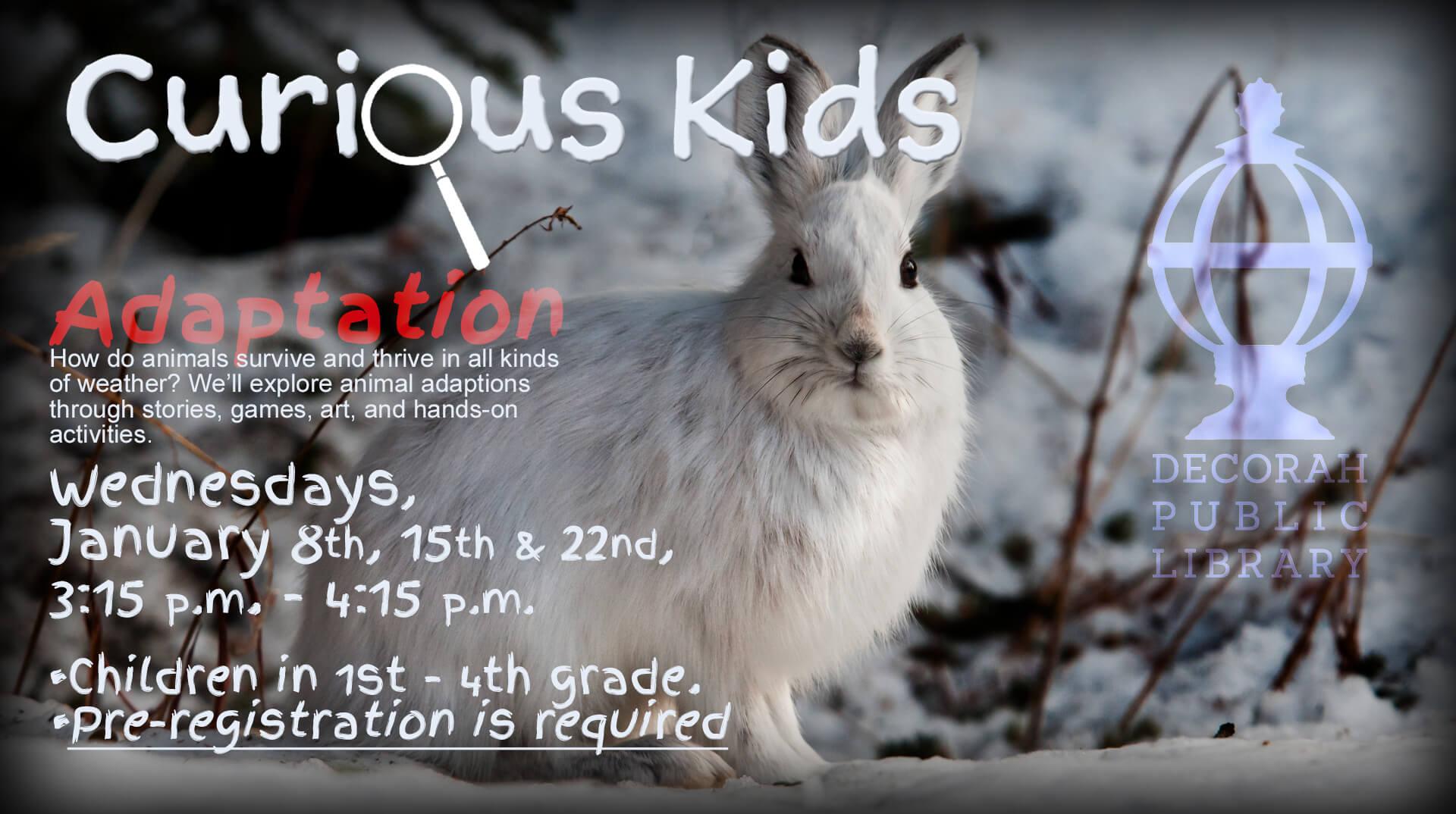 Curious Kids Adaptation