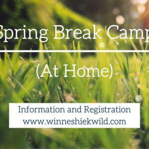 Spring Break Camp at home